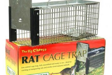 Bẫy diệt chuột