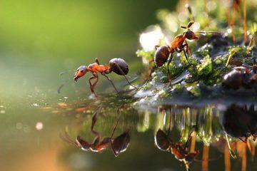 5 lý do để thuê một công ty kiểm soát côn trùng gây hại