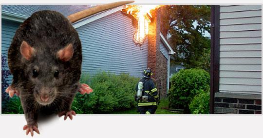 tac hai cua chuot rodent_housefire