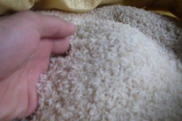 Chống mối mọt cho gạo