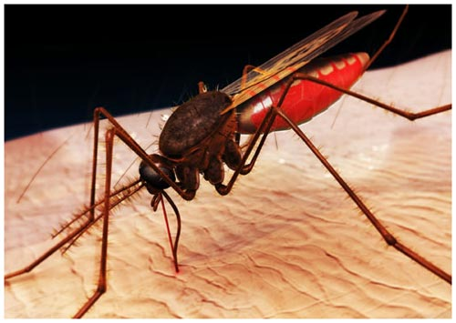 phong muoi mosquito