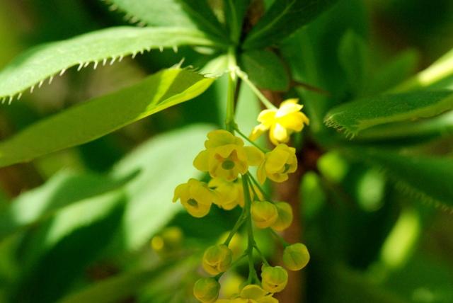 hoa tieu ba 2