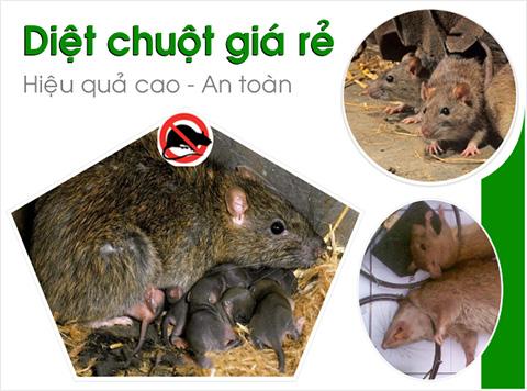 diet-chuot-chuyen-nghiep-gia-re