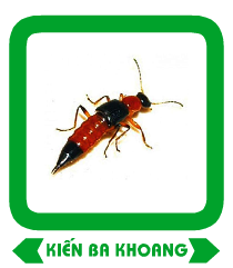 kien-ba-khoang-gr