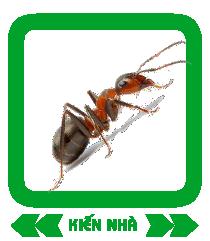 kien-nha-gr