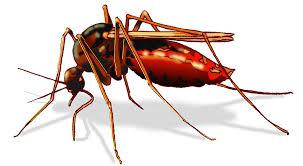 Diệt côn trùng chuyên nghiệp tại tphcm