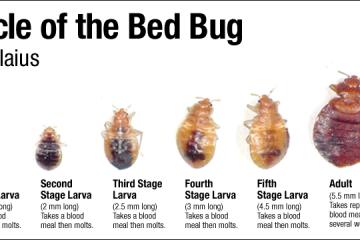 Dịch vụ diệt rệp giường hiệu quả