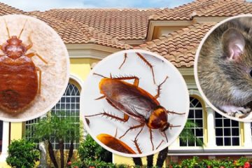 Dịch vụ phun diệt côn trùng