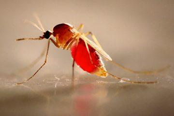 Dịch vụ diệt muỗi tận gốc