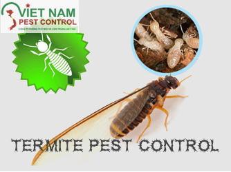 dich vu diet moi tan goc termites-control
