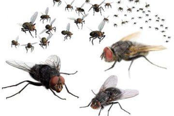 Công ty diệt côn trùng: Cách đuổi ruồi