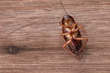 Diệt côn trùng trong nhà bằng phương pháp tự nhiên