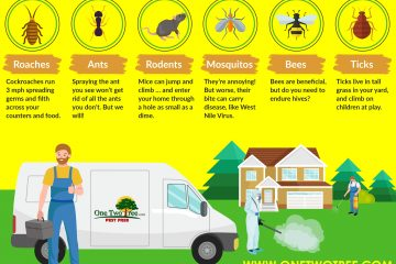 Làm thế nào để bảo vệ sức khỏe gia đình bạn khỏi côn trùng