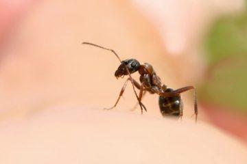 Nguy cơ gia tăng các bệnh do côn trùng đốt tại Mỹ