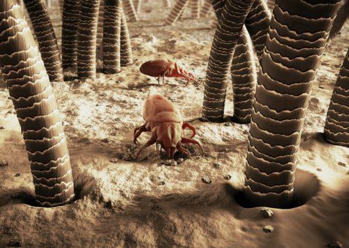 """6 cách an toàn và hiệu quả khiến đám côn trùng mất cơ hội """"tạm trú"""" trong nhà bạn"""