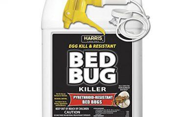 Những loại thuốc xịt rệp giường tốt nhất