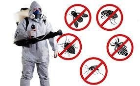 Khử trùng là biện pháp phòng chống côn trùng hiệu quả