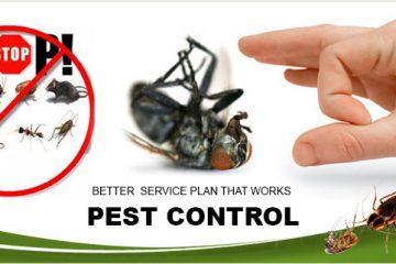 Tại sao phải sử dụng dịch vụ diệt côn trùng định kỳ