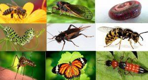 Professional Pest Control in Viet Nam