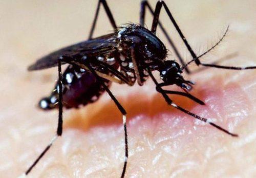 Biện pháp đuổi muỗi trong nhà hiệu quả không cần dùng thuốc độc hại