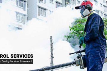 Dịch vụ diệt côn trùng và kiểm soát dịch hại