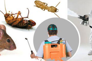 Dịch vụ kiểm soát mối mọt và côn trùng gây hại